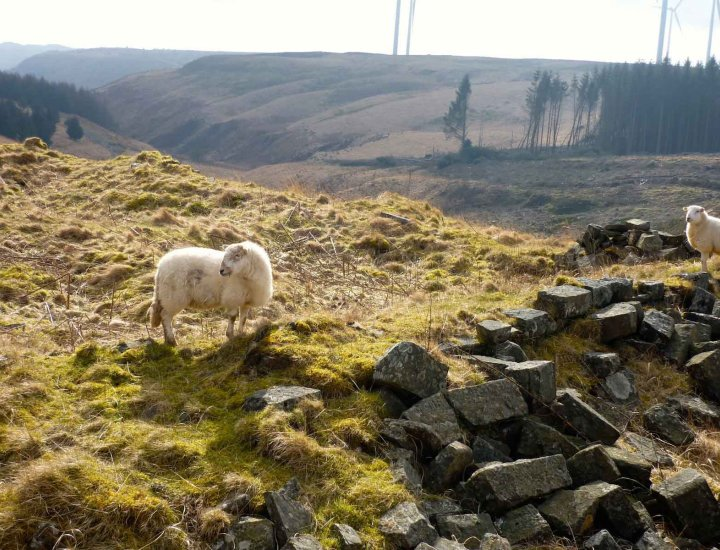 Two sheep on a valley hillside